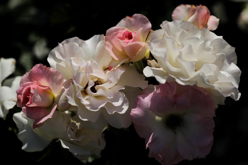 花のかたち_c0252695_09115413.jpg