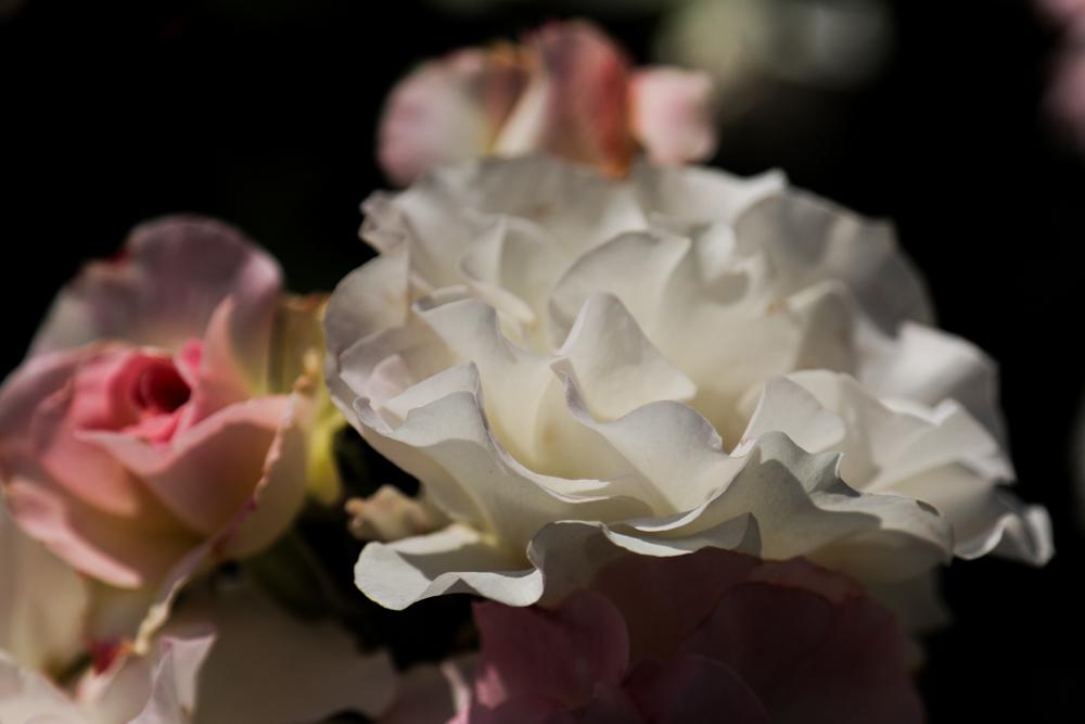 花のかたち_c0252695_09121528.jpg