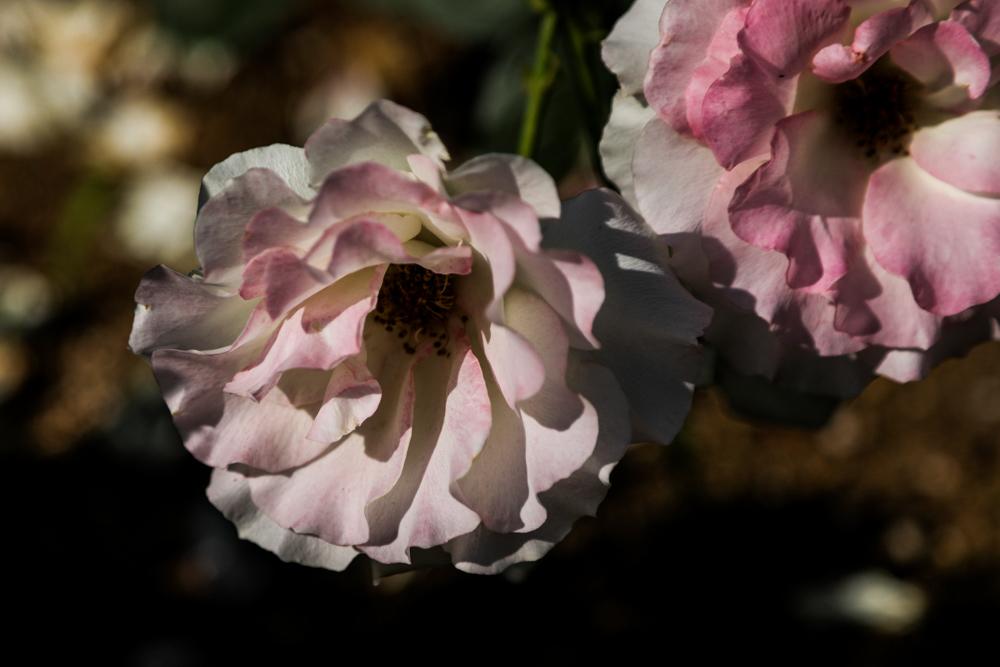 花のかたち_c0252695_09124183.jpg