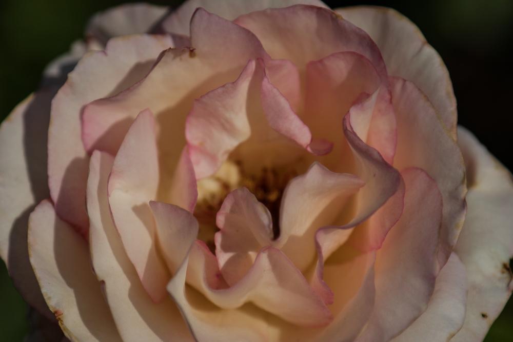 花のかたち_c0252695_09131231.jpg