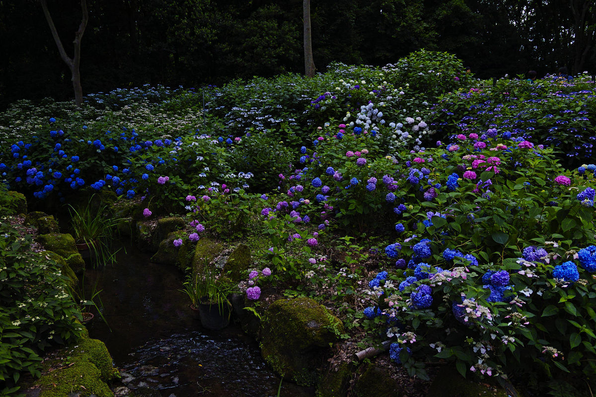 万博記念公園_f0021869_22274336.jpg