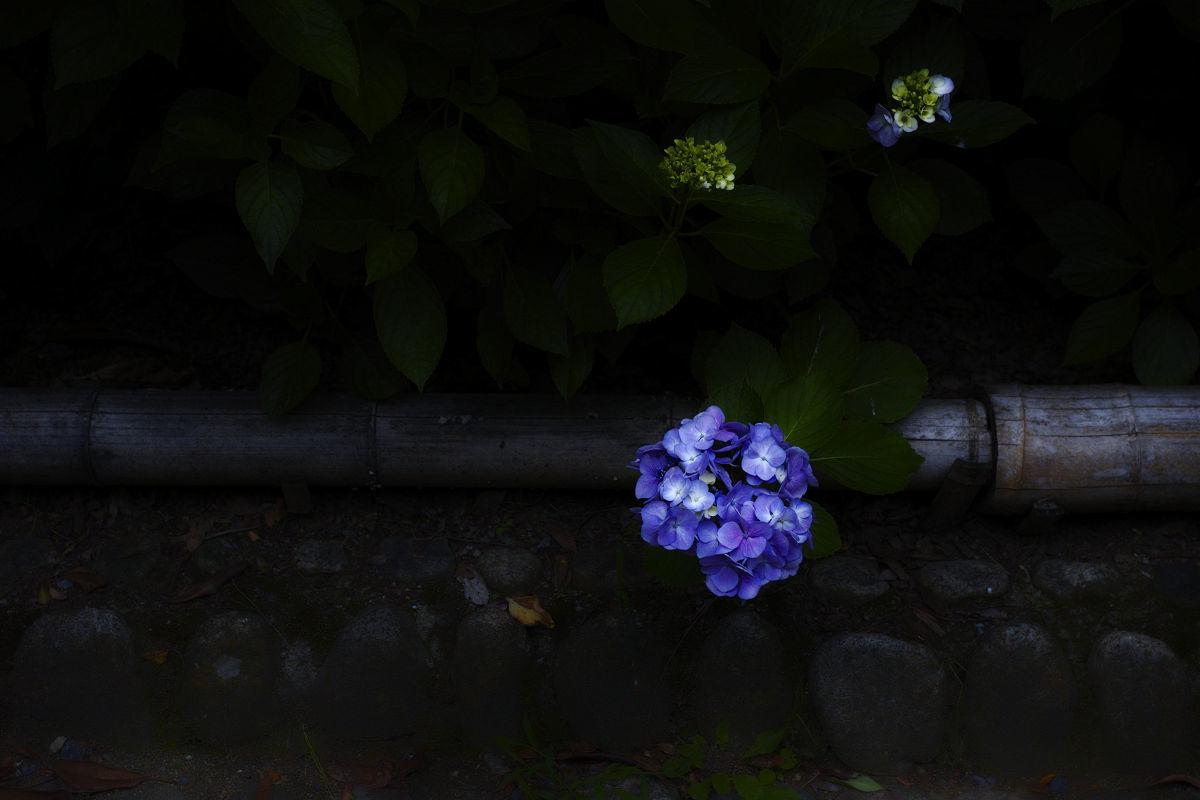 万博記念公園_f0021869_22274392.jpg
