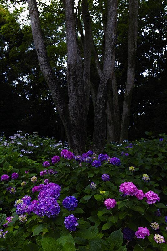 万博記念公園_f0021869_22274411.jpg