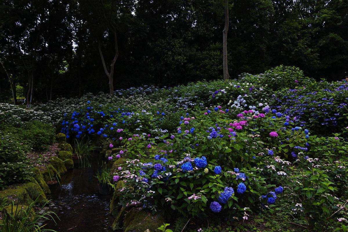 万博記念公園_f0021869_22274439.jpg