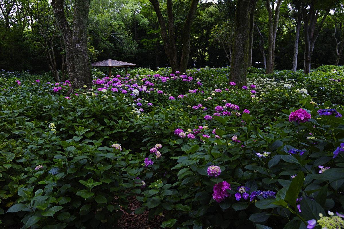 万博記念公園_f0021869_22274493.jpg