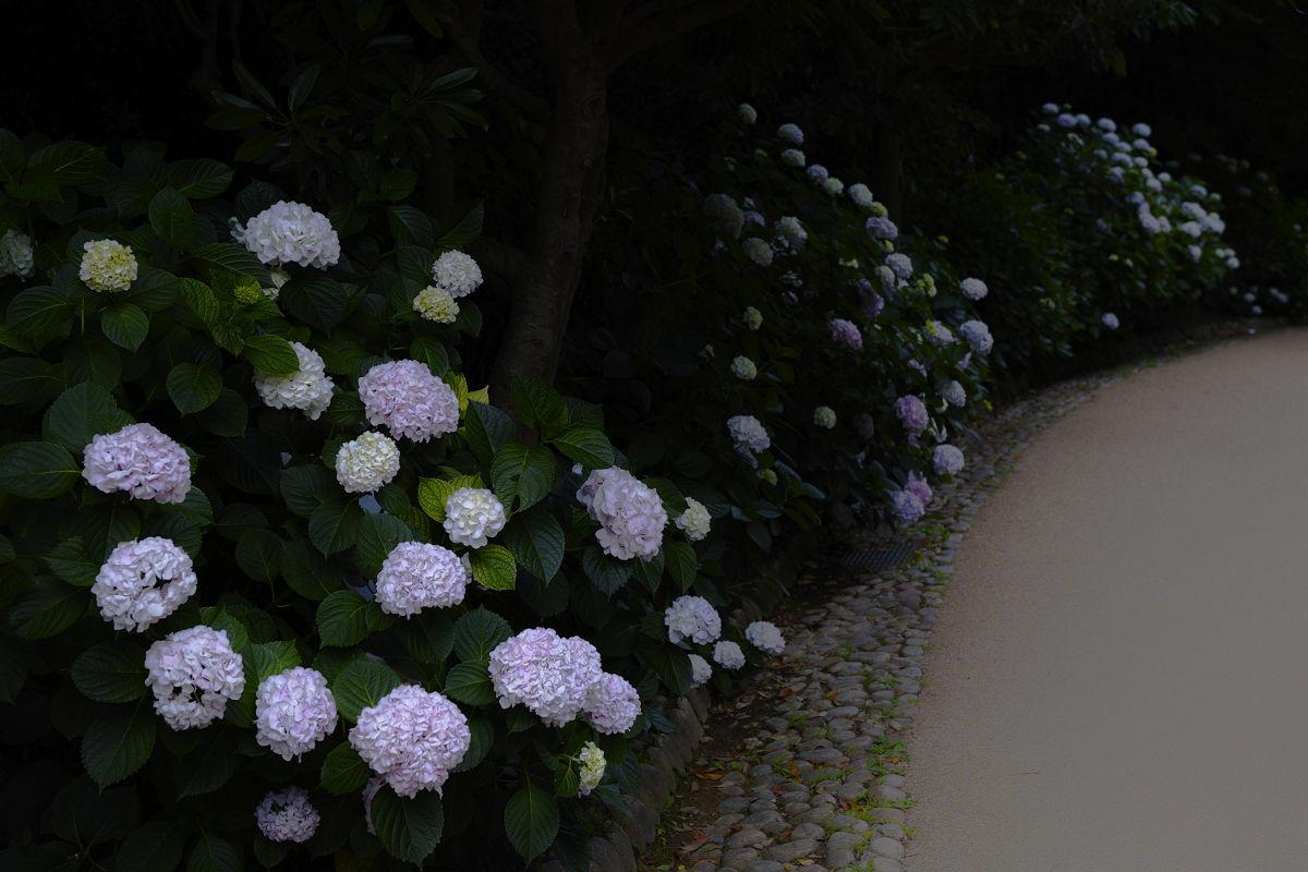 万博記念公園_f0021869_22274512.jpg