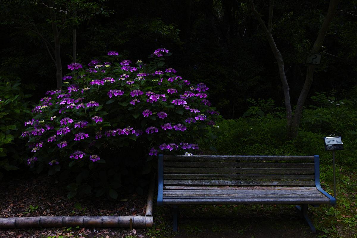 万博記念公園_f0021869_22274560.jpg