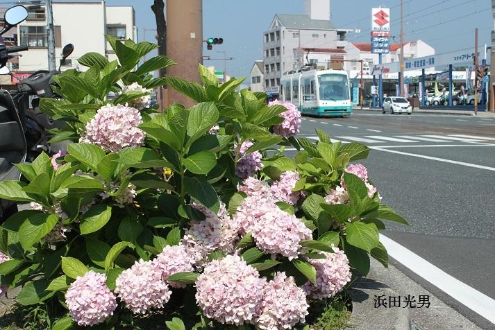 ○紫陽花もそろそろ終わり_f0111289_06574156.jpg