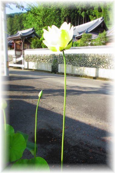 d0367190_20090807.jpg