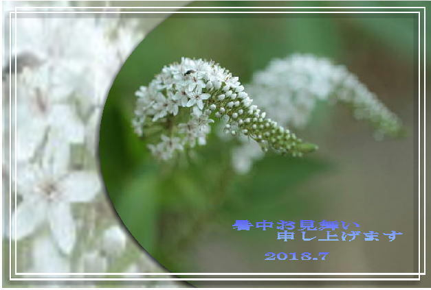 f0164592_20110356.jpg