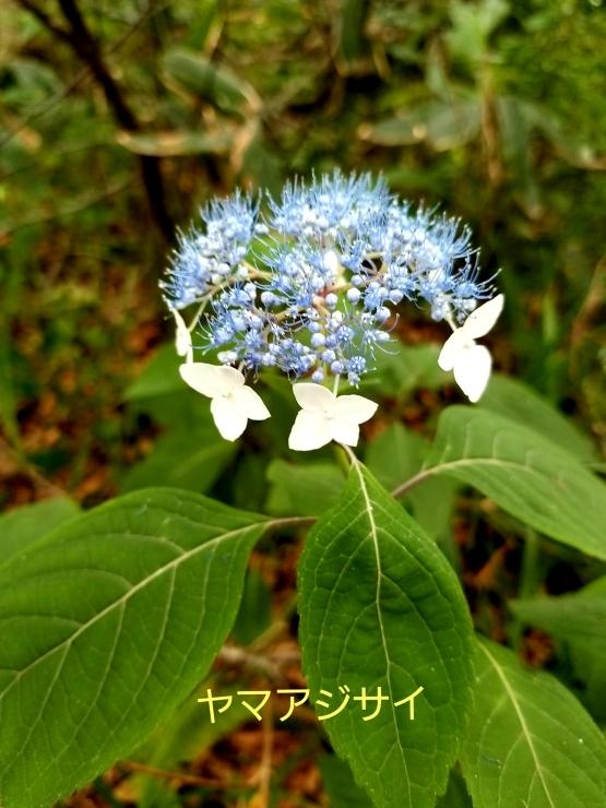 f0219710_16544481.jpg