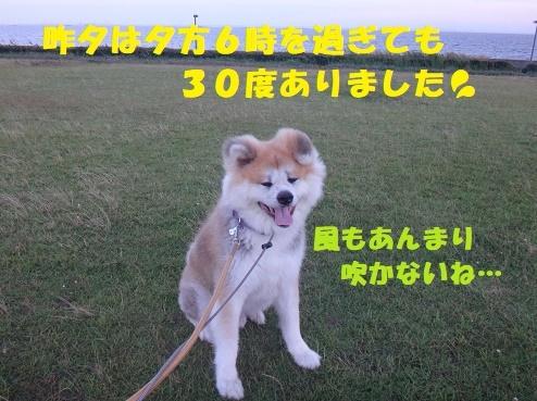 f0121712_16074490.jpg