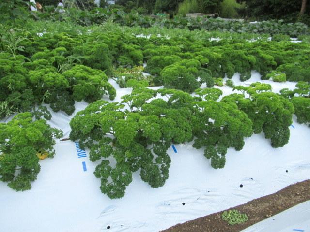 セルフ採り野菜&ラベンダー畑 @小諸_f0236260_23545622.jpg