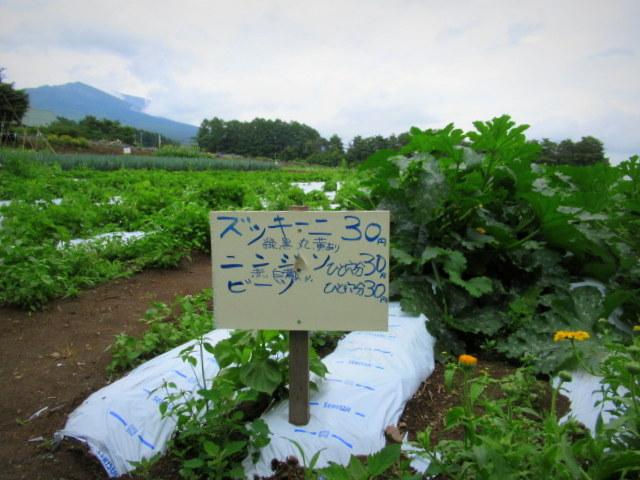 セルフ採り野菜&ラベンダー畑 @小諸_f0236260_23552438.jpg