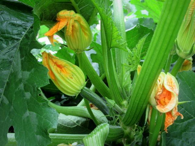 セルフ採り野菜&ラベンダー畑 @小諸_f0236260_23555306.jpg