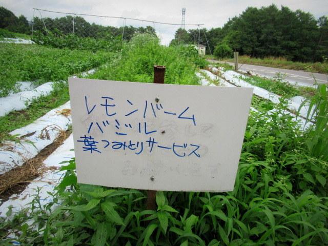 セルフ採り野菜&ラベンダー畑 @小諸_f0236260_23582410.jpg