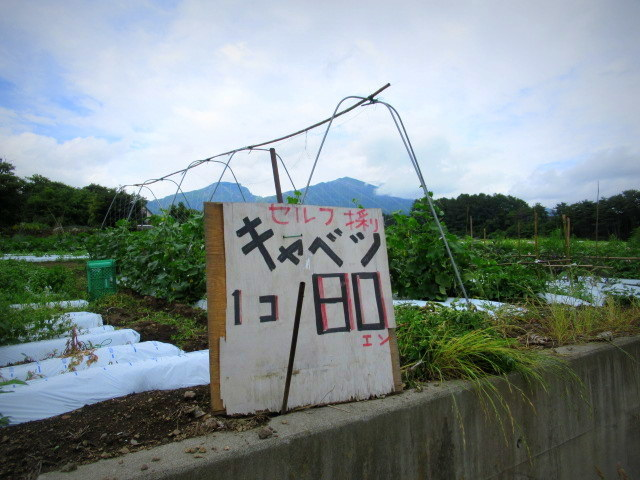 セルフ採り野菜&ラベンダー畑 @小諸_f0236260_23585013.jpg