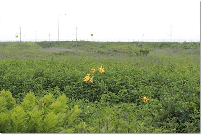 ヨコスト湿原('18・7・8)_f0146493_20472350.jpg