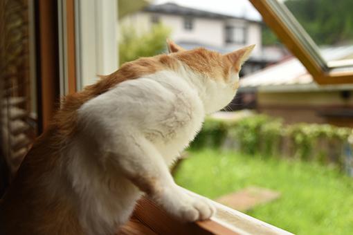 窓辺の考察_b0259218_01195813.jpg