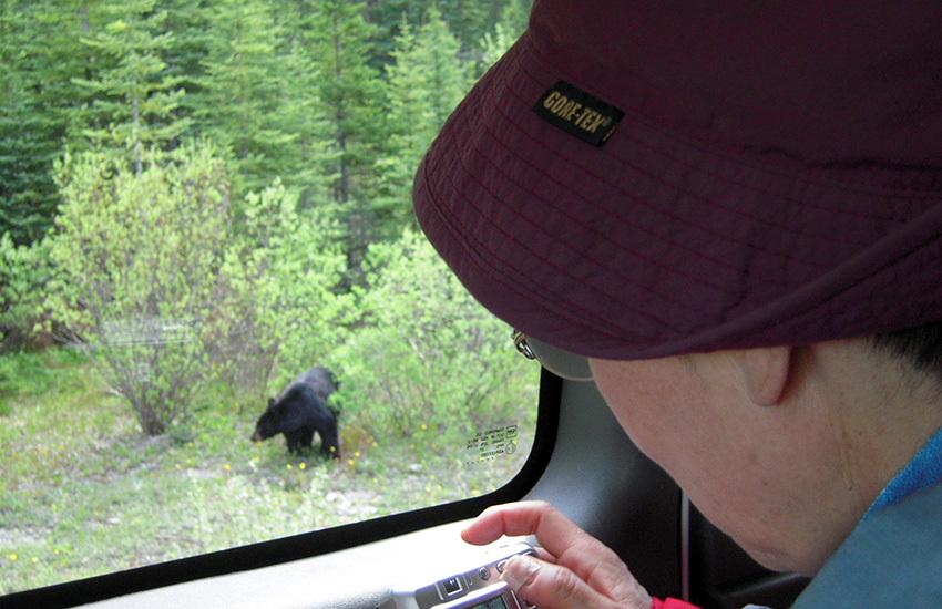 カナディアンロッキーに生息するクマを知ろう!_d0112928_02122490.jpg