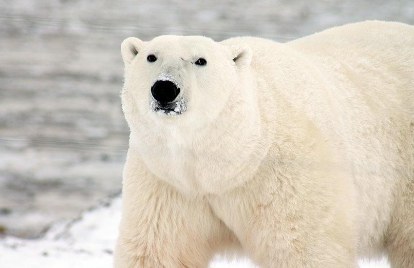 カナディアンロッキーに生息するクマを知ろう!_d0112928_05435790.jpg