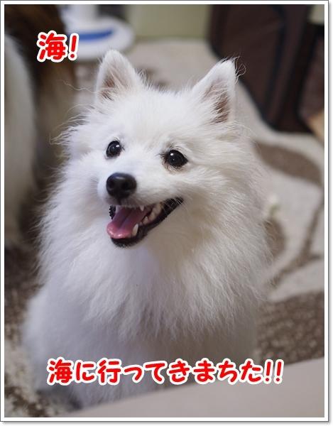 d0013149_00075845.jpg