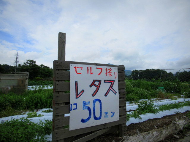 セルフ採り野菜&ラベンダー畑 @小諸_f0236260_00561087.jpg
