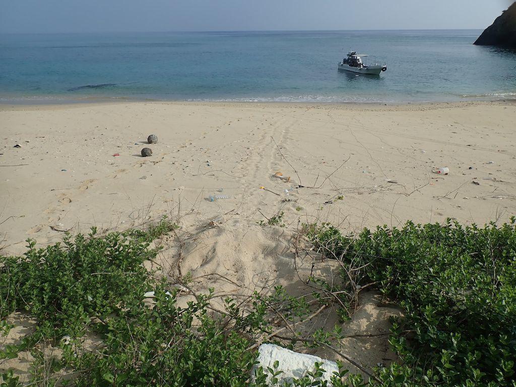 5/16 奄美市名瀬陸路の無い浜のウミガメ調査_a0010095_21260317.jpg