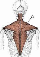 肩こりに悩む女性は男性の2倍!肩こり予防エクササイズの紹介_b0179402_11500902.jpg