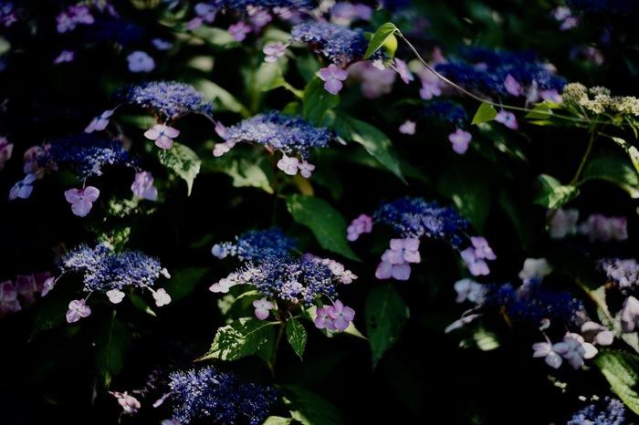 night blooming..._f0057849_22451637.jpg