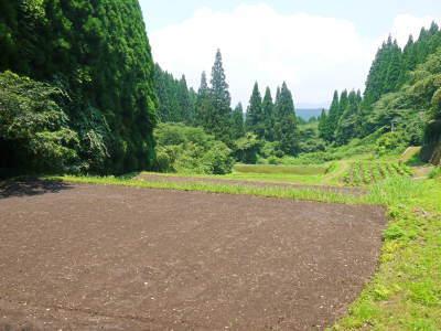 米作りへの挑戦! 田植え後の様子!ジャンボタニシは働き者!_a0254656_18444971.jpg