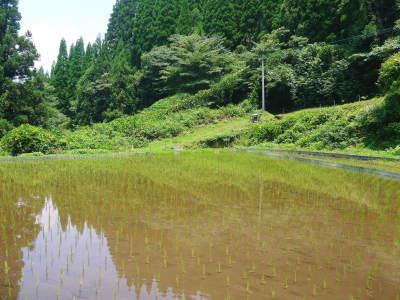 米作りへの挑戦! 田植え後の様子!ジャンボタニシは働き者!_a0254656_18494372.jpg