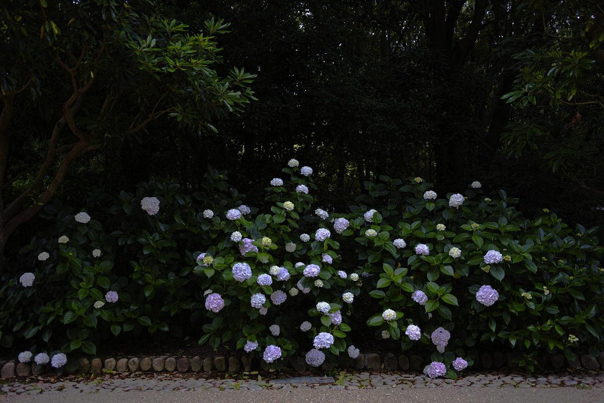 万博記念公園_f0021869_21200328.jpg