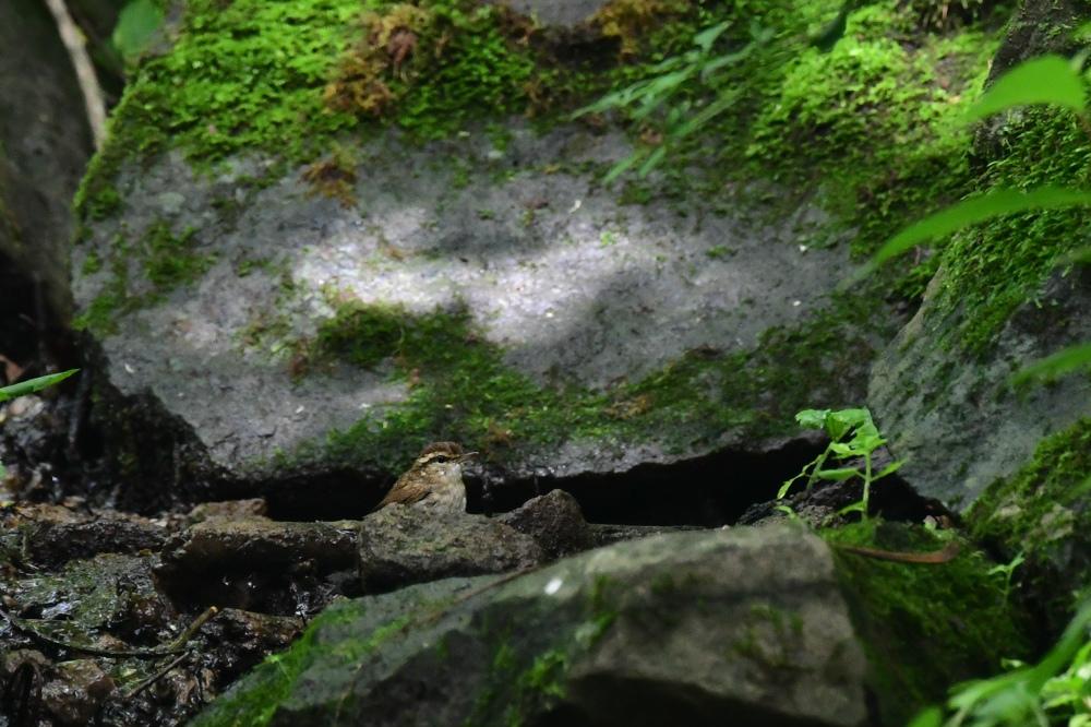 岩風呂 ヤブサメ_f0053272_23584214.jpg