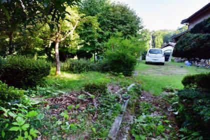 先月には頑張って庭中きれいにしたのに.........雑草の育つのは早いし強いわ〜_b0194185_21511097.jpg