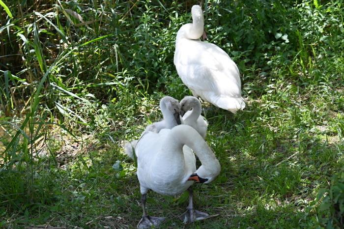 6月に出会った鳥さんたち①_a0127090_10015423.jpg