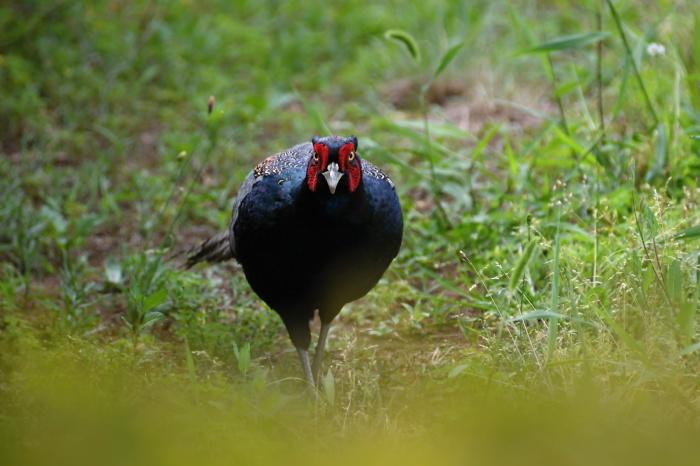 6月に出会った鳥さんたち①_a0127090_10021751.jpg