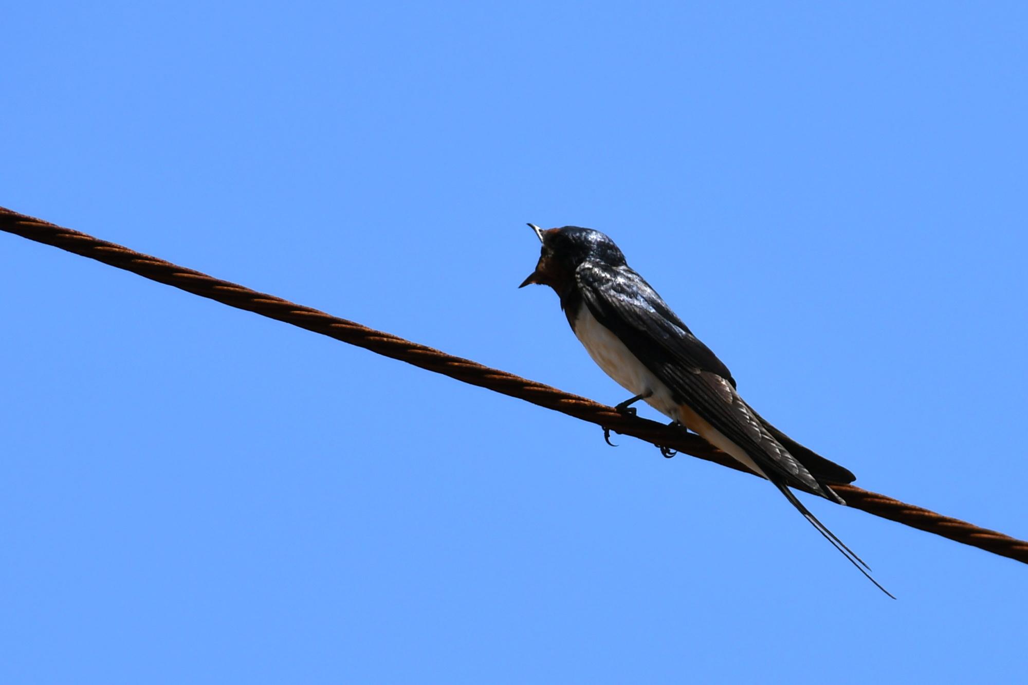 6月に出会った鳥さんたち②_a0127090_12592393.jpg