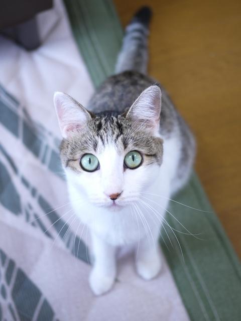 猫のお留守番 みゆちゃん編。_a0143140_16475120.jpg