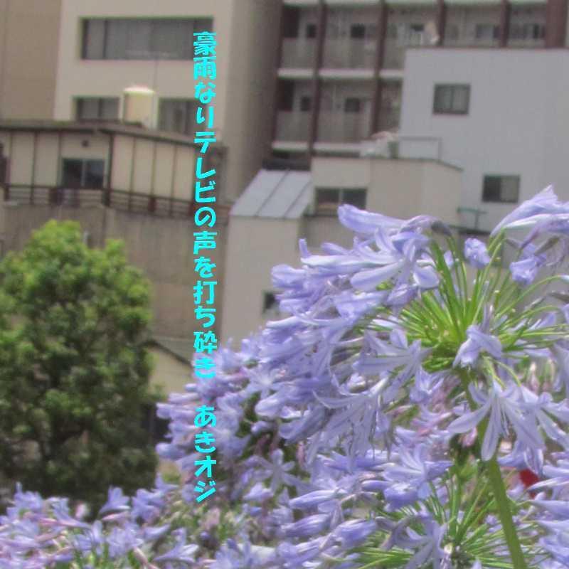 f0117041_07030820.jpg