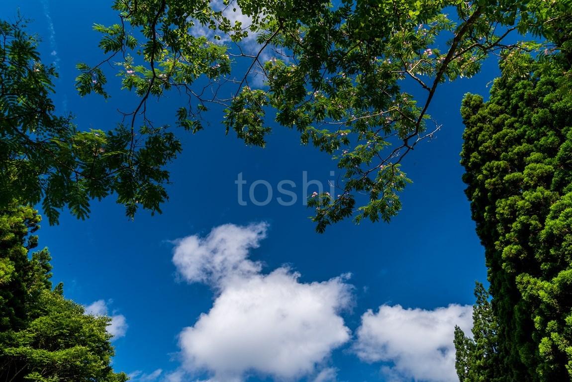 今年も半夏生が暑い_c0350572_21504943.jpg