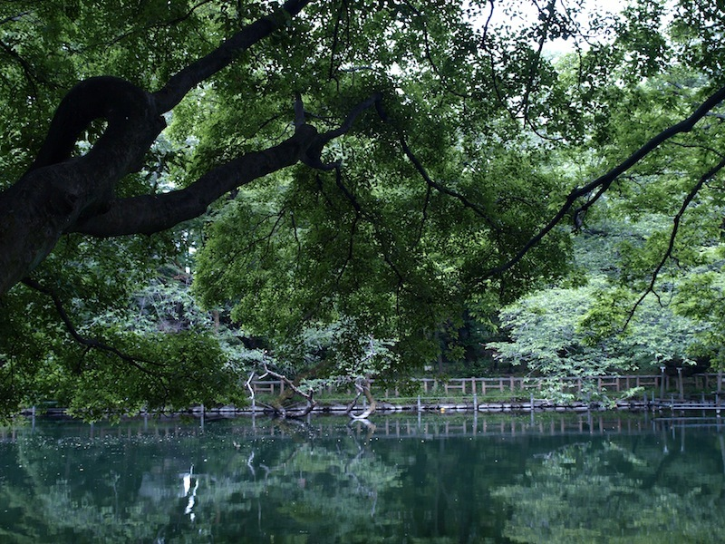 酷暑を快適に過ごす方法 気温35℃でも風通しの良い木陰は体感気温27℃くらいって知ってました?_e0122680_14071119.jpg