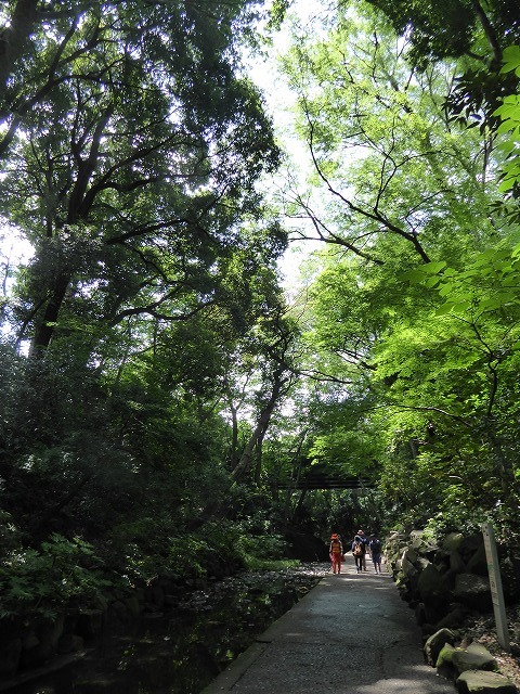 都心とは思えないような緑と横穴古墳や滝、お不動様、甘味茶屋を楽しめる渓谷があるよ♪ 等々力渓谷はアクセスもいい!_b0287088_09150371.jpg