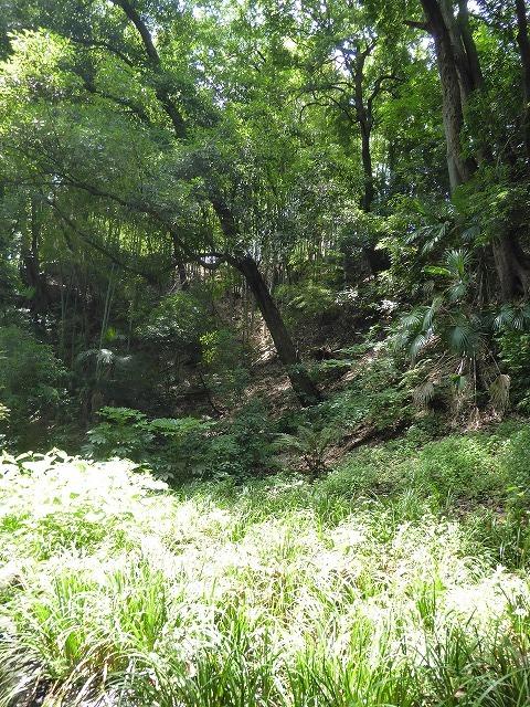 都心とは思えないような緑と横穴古墳や滝、お不動様、甘味茶屋を楽しめる渓谷があるよ♪ 等々力渓谷はアクセスもいい!_b0287088_09160952.jpg