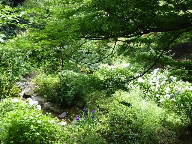 都心とは思えないような緑と横穴古墳や滝、お不動様、甘味茶屋を楽しめる渓谷があるよ♪ 等々力渓谷はアクセスもいい!_b0287088_09243590.jpg