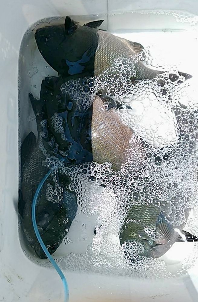 🎣7月14日通し釣りの釣果・:*+.\\(( °ω° ))/.:+_d0114397_13094655.jpeg