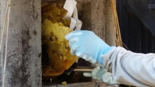 ご宿泊滞在記~日本ミツバチの蜂蜜採り_f0208315_09232023.jpg