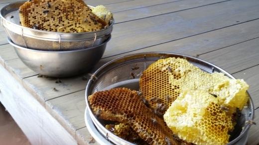 ご宿泊滞在記~日本ミツバチの蜂蜜採り_f0208315_09240399.jpg