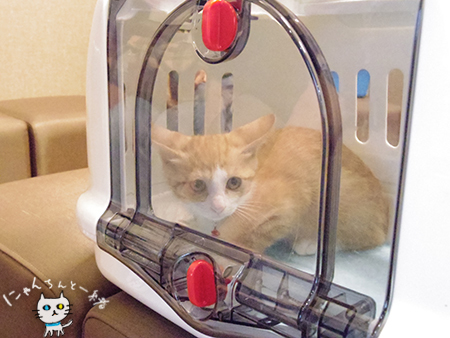 ちびトラちゃん、お猫入りしました。_e0031853_04520737.jpg