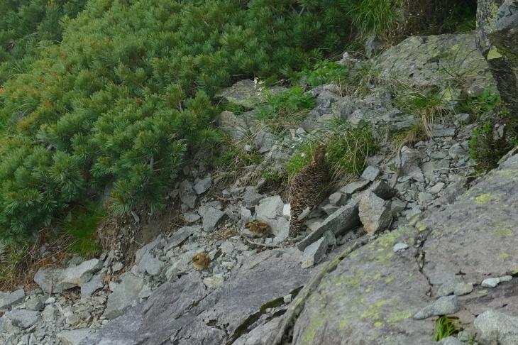 一人登山 前穂高岳 奥穂高岳_e0000910_09395206.jpg